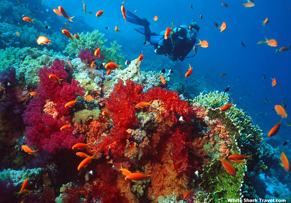 Dive Into Hurghada on the Cruise to the Red Sea